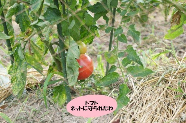 DSC07517.jpg