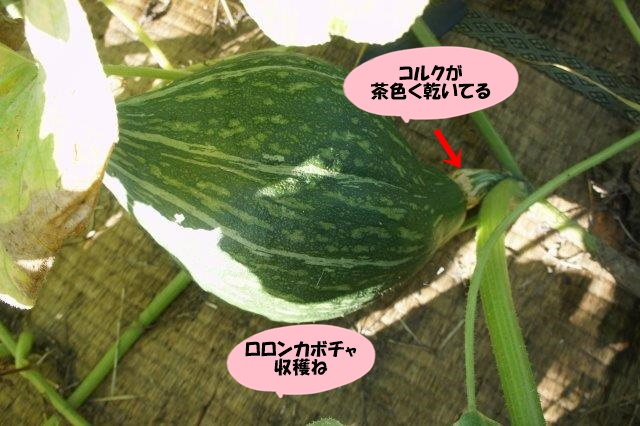 DSC07739.jpg