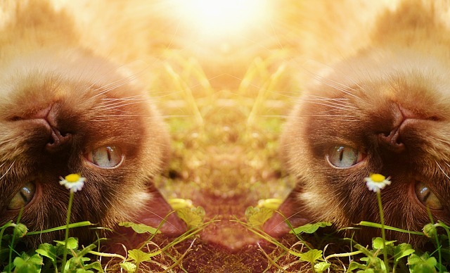 cat-1792627_640.jpg