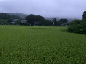 19雨 (3)