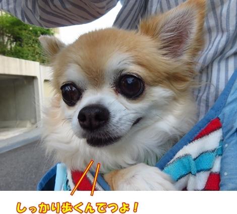 201708IMG_2653.jpg