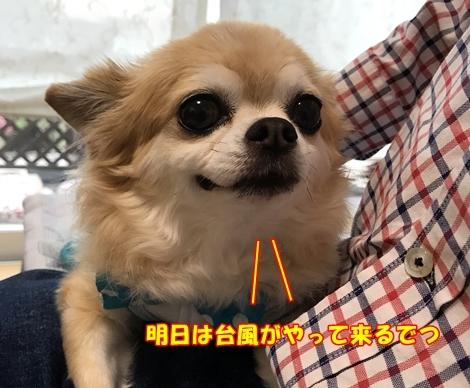 201709mIMG_3767.jpg