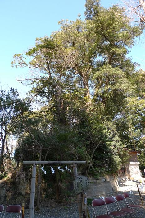 上総の国の神社  玉前神社  22