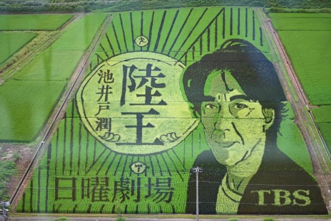 12210-田んぼアート-4