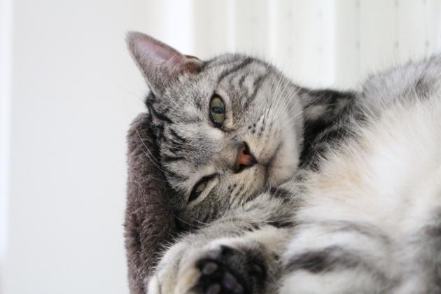 猫にも堪える暑さ