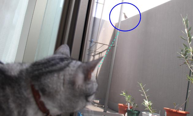 猫も気になる謎の小鳥