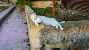 cat-2410331_960_720.jpg