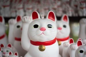 cat-2570417_960_720.jpg
