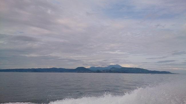 イルカウォッチング 海上