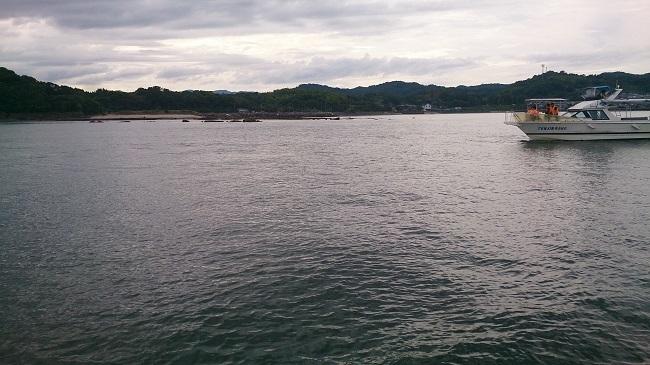 イルカウォッチング 停船