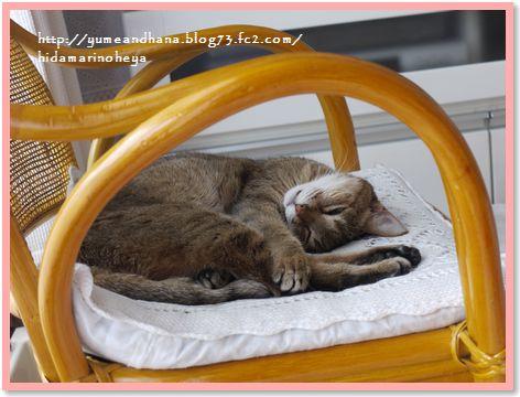 001-モカの椅子170827-2