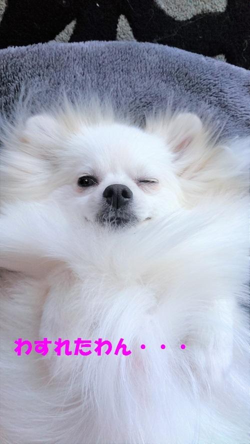 DSC_0103_2.jpg