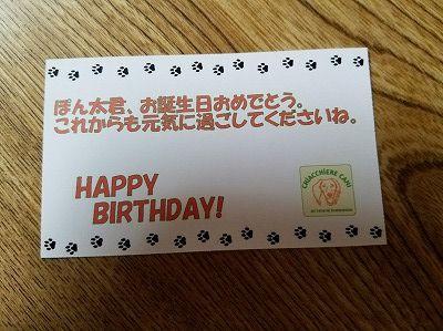 ぽんちゃん11歳 (27)