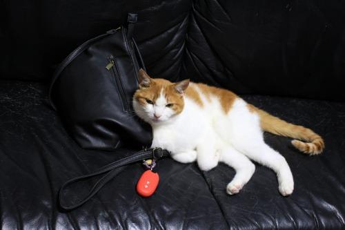ブログNo.1026(悪顔の枕猫)1