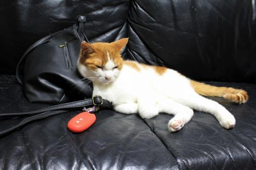 ブログNo.1026(悪顔の枕猫)3