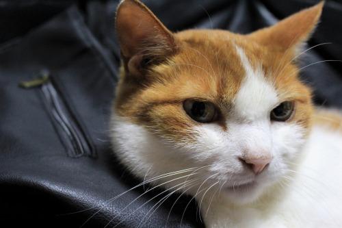 ブログNo.1026(悪顔の枕猫)4