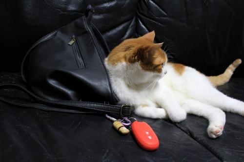 ブログNo.1026(悪顔の枕猫)6