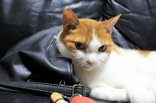 ブログNo.1026(悪顔の枕猫)8