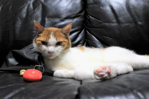 ブログNo.1026(悪顔の枕猫)9