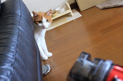 ブログNo.1022(怖いけど気になるドライヤーNo.2)1