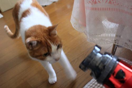 ブログNo.1022(怖いけど気になるドライヤーNo.2)4