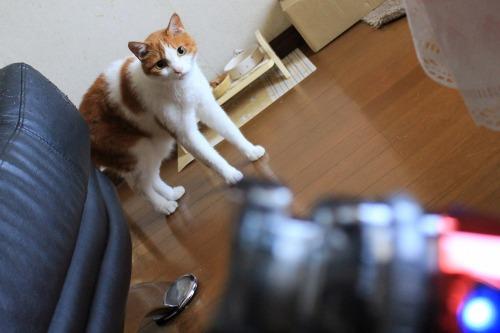 ブログNo.1024(怖いけど気になるドライヤーNo.3)1