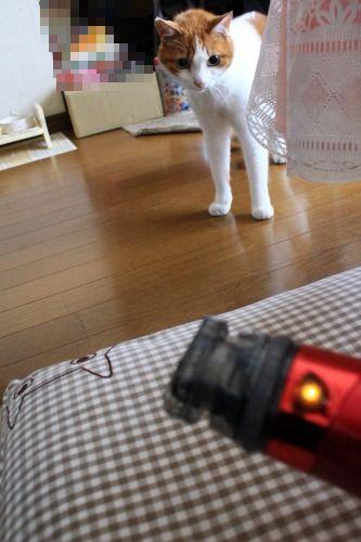 ブログNo.1024(怖いけど気になるドライヤーNo.3)2