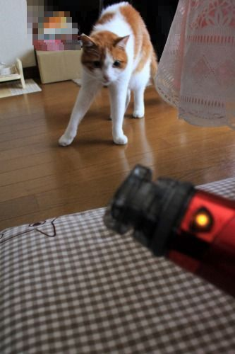ブログNo.1024(怖いけど気になるドライヤーNo.3)4
