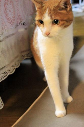 ブログNo.1048(布団クリーナーに警戒する猫)2