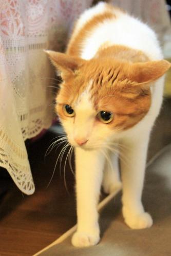 ブログNo.1048(布団クリーナーに警戒する猫)3