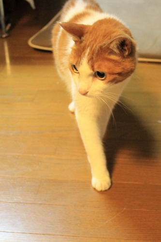 ブログNo.1048(布団クリーナーに警戒する猫)5