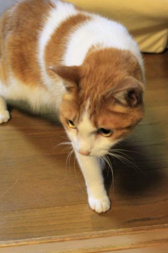 ブログNo.1048(布団クリーナーに警戒する猫)6