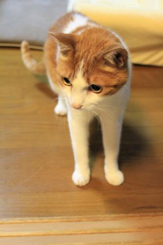 ブログNo.1048(布団クリーナーに警戒する猫)7