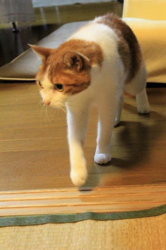 ブログNo.1048(布団クリーナーに警戒する猫)8