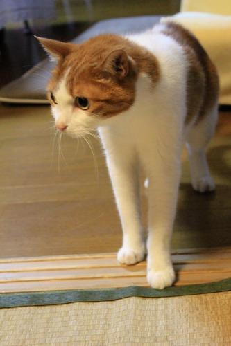 ブログNo.1048(布団クリーナーに警戒する猫)9