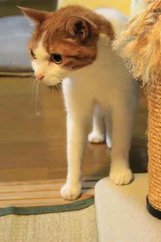 ブログNo.1048(布団クリーナーに警戒する猫)10
