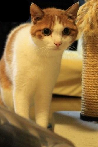 ブログNo.1049(布団クリーナーに警戒する猫)4