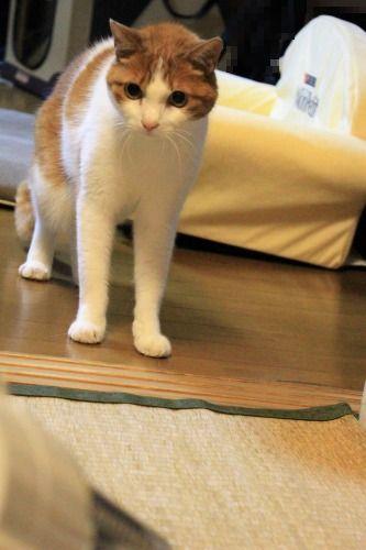 ブログNo.1049(布団クリーナーに警戒する猫)6