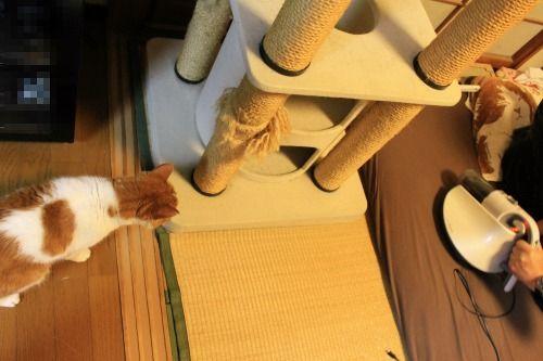 ブログNo.1049(布団クリーナーに警戒する猫)7