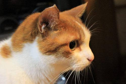 ブログNo.1049(布団クリーナーに警戒する猫)9