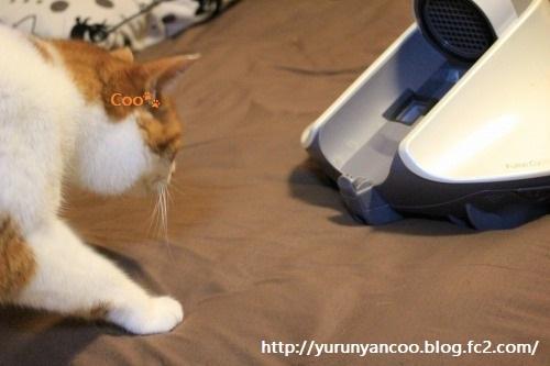 ブログNo.1050(布団クリーナーに警戒する猫 No.3)1