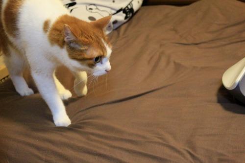 ブログNo.1050(布団クリーナーに警戒する猫 No.3)5