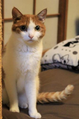 ブログNo.1050(布団クリーナーに警戒する猫 No.3)11