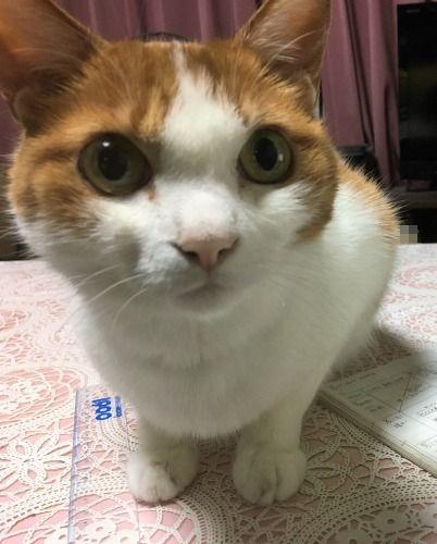 ブログNo.1035(にゃんこあるある?)5