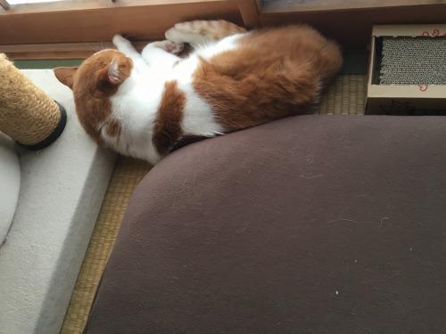 ブログNo.1052(いい枕、見っけ♪)1