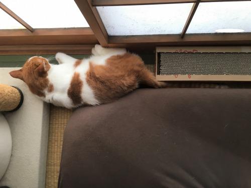 ブログNo.1052(いい枕、見っけ♪)6