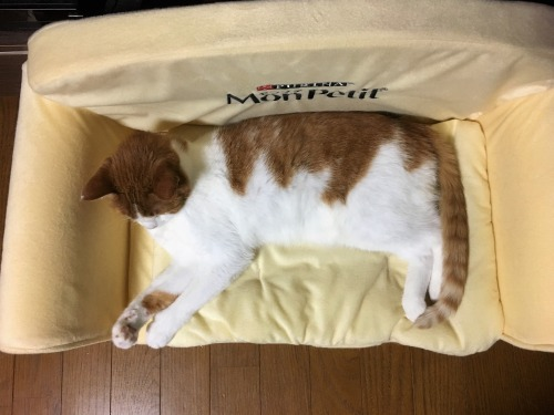 ブログNo.1055簡単(ソファーと同じ形の猫)1