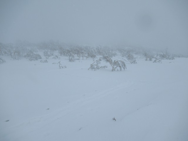 1月4日 1400mでハイク終了