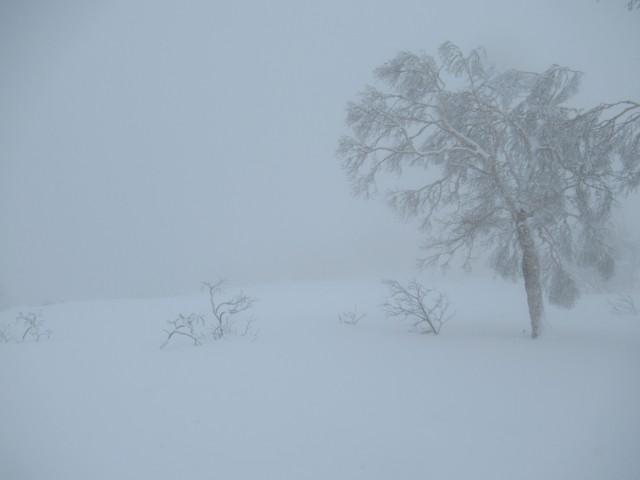 1月4日 バフバフサラサラ