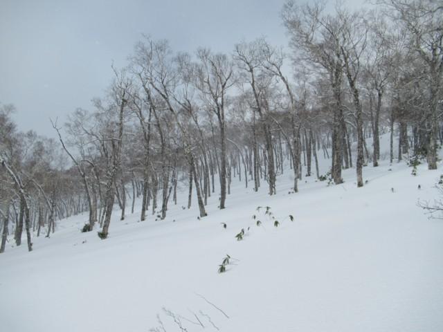 1月6日 快適そうなツリー